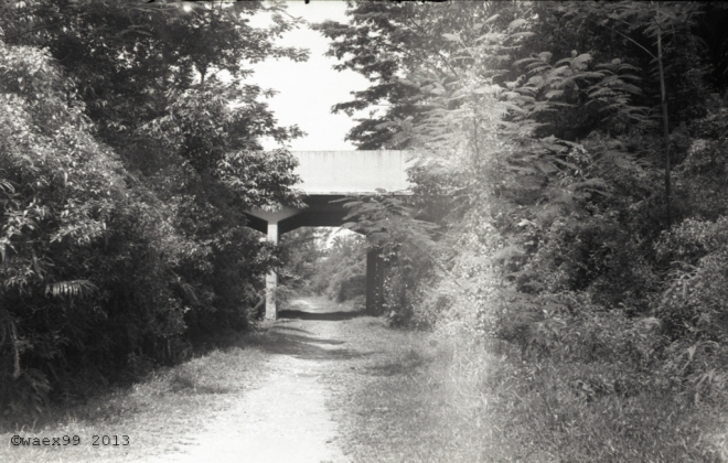 Bridge over the green corridor
